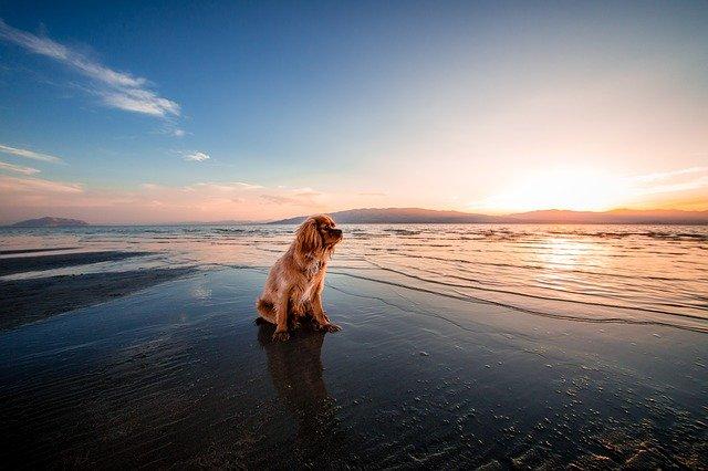 Dlaczego psy uwielbiają wygrzewać się na słońcu?