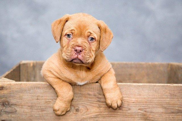 Jak pozbyć się pcheł u psa?